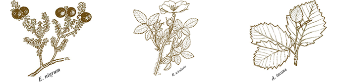 Illustrated plants